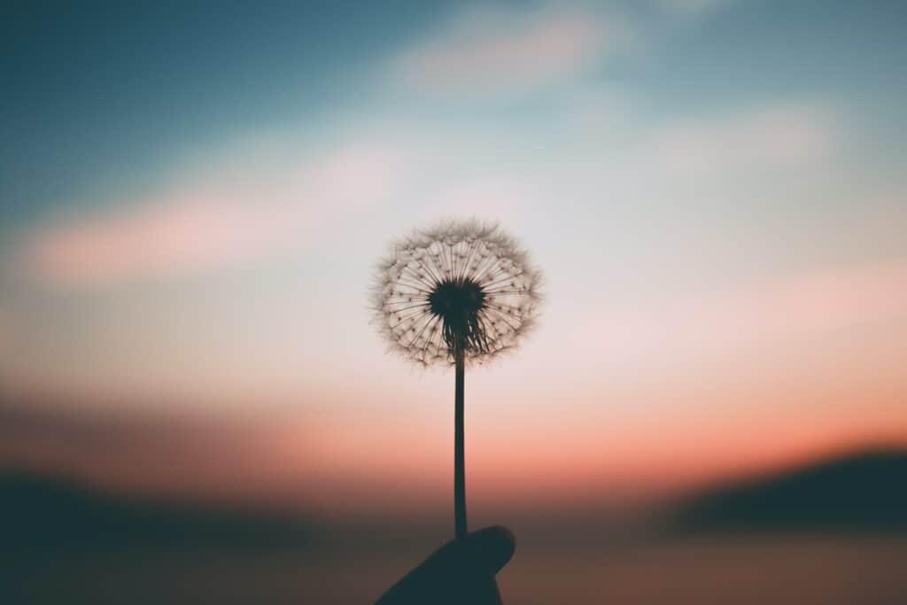 Mindfulness Dandelion Clock